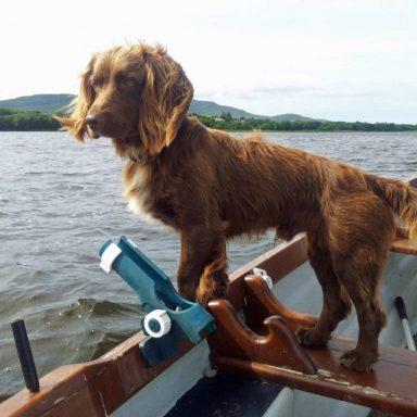 Rocky surveys Lake Derryhick